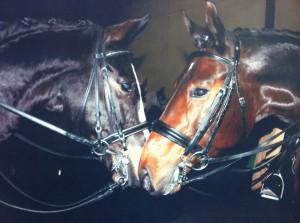 Pferde 001